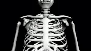 Human Anatomy And Physiology Videos Moving Of 3d Skeleton Skull Anatomy Human Medical Body Biology