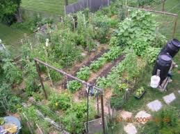 designs for a small vegetable garden layout landscaping