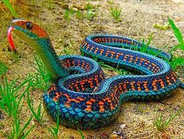 makeup classes las vegas airbrush makeup classes las vegas snakes snake