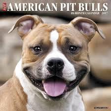 america pit bull terrier club amazon com just american pit bull terriers 2017 wall calendar