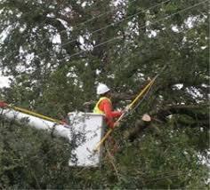 electric power etool overhead line work line clearance tree