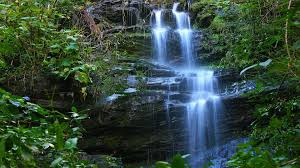 1920x1080 waterfall and plant background wallpaper