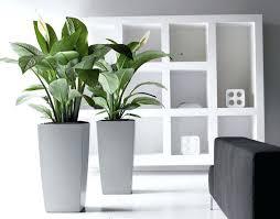 living room eye catching plants for living room plants living