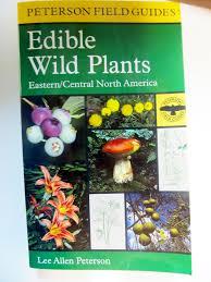 native american edible plants wildflower books u0026 notecards