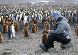 Georgia cruise travel images South georgia and the south sandwich islands travel guide jpg