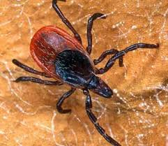 Ticks In Backyard Tick Boom Continues In Michigan Here U0027s What You Need To Know