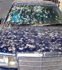 si e voiture photo 10 conduire une voiture sale en russie est passible d une