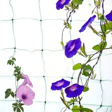 compare prices on climbing plant net online shopping buy low