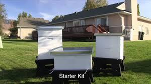 Raising Bees In Backyard by Harvest Lane Honey Basic Hive Set Up Youtube