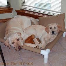 Do Bed Bugs Get On Dogs Best 25 Dog Cots Ideas On Pinterest Diy Cot Beds 3 Pvc Pipe