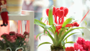 Valentine S Day Store Decoration valentines day window display decoration stock footage video