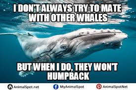 Whaling Meme - simple whaling meme whale memes kayak wallpaper