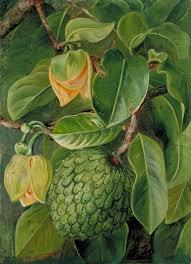 Foliage Flower - foliage flowers and fruit of the soursop brazil art uk