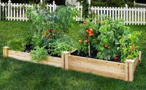 garden ideas how to start a vegetable garden how to grow