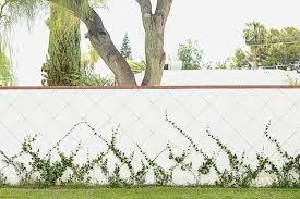 Urban Garden Phoenix - growing some green things diana elizabeth