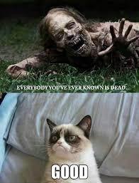 Angry Cat Meme - tech news at http xvoda com funny pinterest grumpy cat