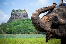 Miss Sri Lanka Negombo Daughter Europe Sri Lanka Discovery Flights Included Webjet Exclusives