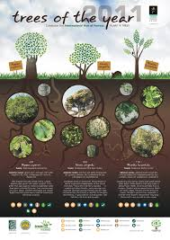 Trees And Their Meanings Trees Of The Year Posters