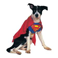 halloween for dogs costumes 20 superhero halloween costumes for kids grown ups and dogs