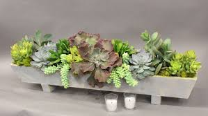 succulent arrangements succulent arrangement anthony s flowers