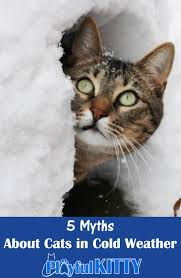 5 myths about cats in cold weather playful kitty