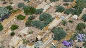 Images Of Rock Gardens Rock Gardening Creating A Miniature World Of Plants The High