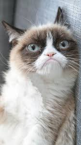 Frown Cat Meme - the grumpy cat meme democratic underground