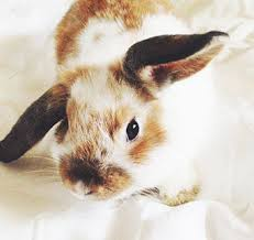 rabbit bunny the ultimate beginner s guide to a pet rabbits