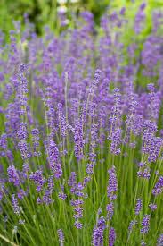 british native plants best plants for rain gardens sunset