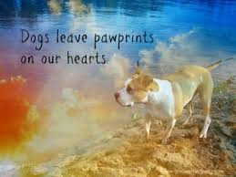 dog condolences dog sympathy cards with moving messages and quotes