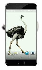 ostrich live wallpaper android apps on google play