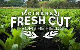 best black friday cigar deals cigars com buy premium cigars online