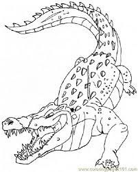 alligators coloring free alligator coloring pages