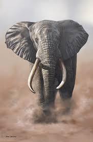 wildlife art acrylic painting madiba elephant by david bucklow original paintings