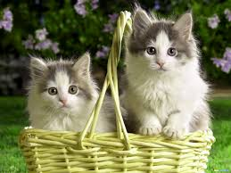 rare cat wallpapers all cat wallpapers wallpapers free download 30482 662236347