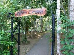 herbal garden herbal garden picture of dalmanuta gardens ayurvedic resort