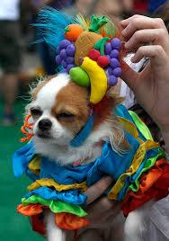 100 chihuahua costumes halloween 25 dog halloween costumes