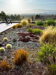 roof garden plants 12 great drought tolerant plants sunset magazine