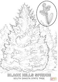pine tree coloring pages south dakota state tree coloring page free printable coloring pages