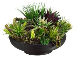 amazon succulents 26 best succulent arrangements images on pinterest succulent