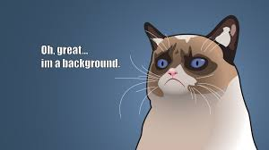 Tard The Grumpy Cat Meme - grumpy cat meme wallpaper 7662 1920 x 1080 wallpaperlayer com