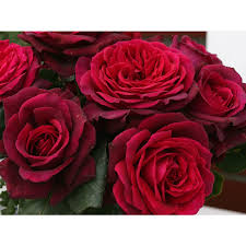 shop roses at lowes com