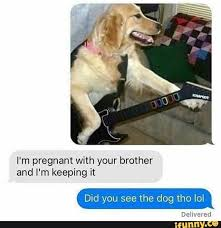 Dog Phone Meme - phone dump some new some old it s just a meme stew album on imgur