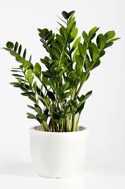 indoor plants images the health benefits of indoor plants are numerous southern living
