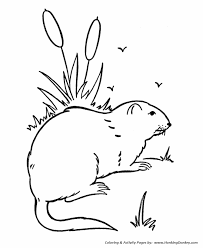 Wild Animal Coloring Pages Wild Groundhog Coloring Page And Kids Groundhog Color Page