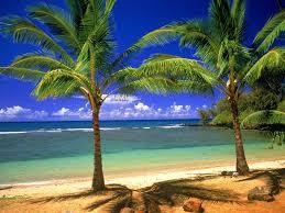 Palm Tree Wallpaper Tropical Wallpaper Desktop Cool Tropical Backgrounds Superb Hd