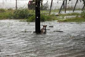 Texas how long does it take mail to travel images Poor dog abandoned in texas as flood waters rise daily mail online jpg