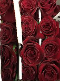 forever roses forever young roses flower kytičky pinterest forever