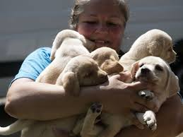 dog euthanasia hurricane irma dogs spared euthanasia by knoxville