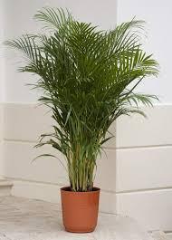 plante d駱olluante chambre plante dépolluante 10 plantes qui améliorent l intérieur